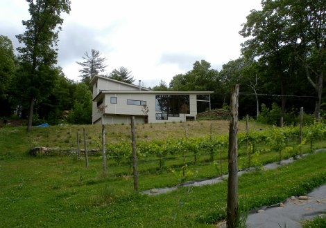 N Leverett from vineyard